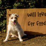 Adopt Don't Shop: Why You Should Rescue Your Next Pet