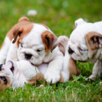 You Can Have Nice Things: How to Puppy Proof Your House