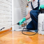 Keeping Pests Out: The Ultimate List of Pest Control Tips